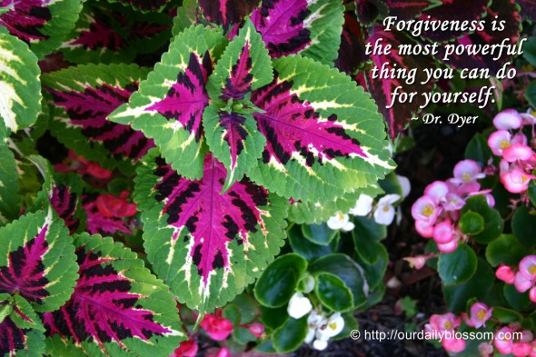 Forgiveness is the most powerful thing you can do for yourself. ~ Dr. Dyer