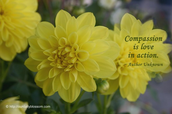 Compassion is love in action. ~ Author Unknown