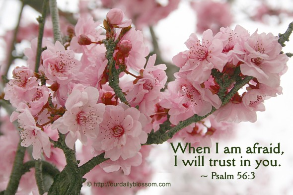 When I am afraid, I will trust in you. ~ Psalm 56:3