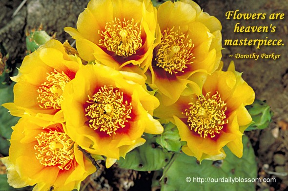 Flowers are heaven's masterpiece. ~ Dorothy Parker