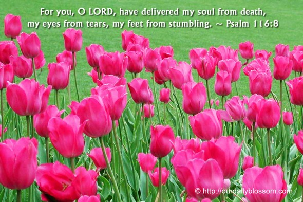 For you, O LORD, have delivered my soul from death, my eyes from tears, my feet from stumbling. ~ Psalm 116:8