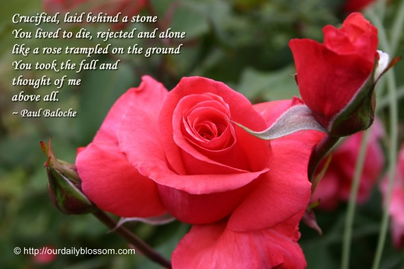 Crucified, laid behind a stone... You lived to die, rejected and alone... like a rose trampled on the ground... You took the fall and thought of me, above all. ~ Paul Baloche
