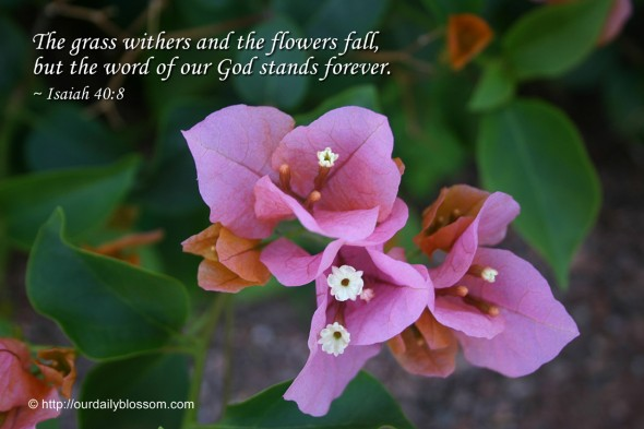 The grass withers and the flowers fall, but the word of our God stands forever. ~ Isaiah 40:8