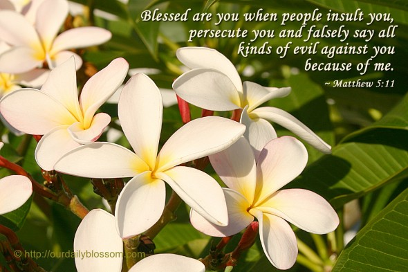 Blessed are you when people insult you, persecute you and falsely say all kinds of evil against you because of me. ~ Matthew 5:11