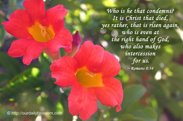 Who is he that condemns? It is Christ that died, yes rather, that is risen again, who is even at the right hand of God, who also makes intercession for us. ~ Romans 8:34