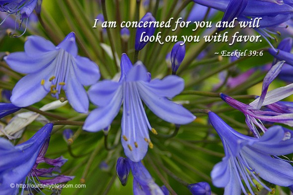 I am concerned for you and will look on you with favor. ~ Ezekiel 39:6
