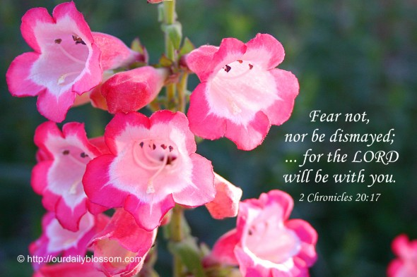 Fear not, nor be dismayed; ... for the LORD will be with you. ~ 2 Chronicles 20:17