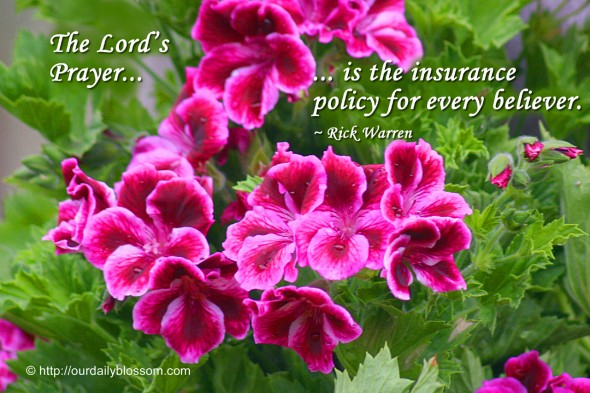 The Lord's Prayer is the insurance policy for every believer. ~ Rick Warren