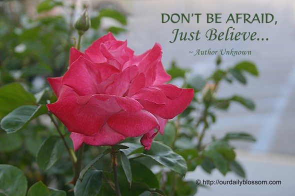 Don't be afraid, Just Believe... ~ Author Unknown