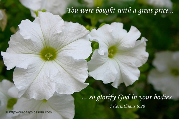 You were bought with a great price... so glorify God in your bodies. ~ 1 Corinthians 6:20