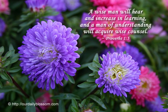 A wise man will hear and increase in learning, and a man of understanding will acquire wise counsel. ~ Proverbs 1:5