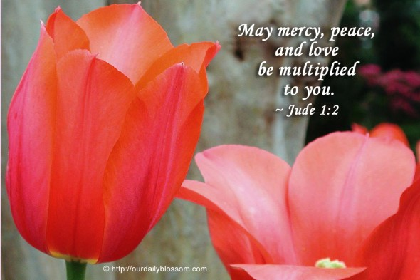 May mercy, peace, and love be multiplied to you. ~ Jude 1:2