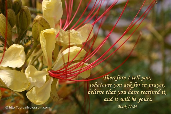 Therefore I tell you, whatever you ask for in prayer, believe that you have received it, and it will be yours. ~ Mark 11:24