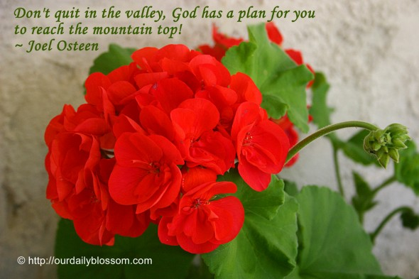 Don't quit in the valley, God has a plan for you to reach the mountain top! ~ Joel Osteen