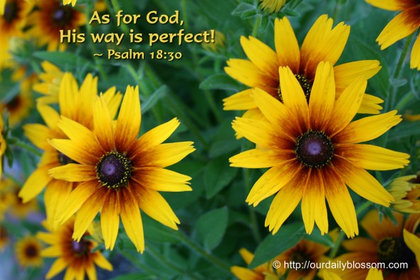 As for God, His way is perfect! ~ Psalm 18:30