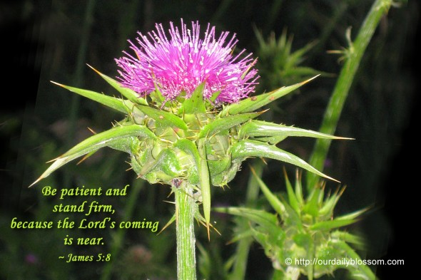Be patient and stand firm, because the Lord's coming is near. ~ James 5:8