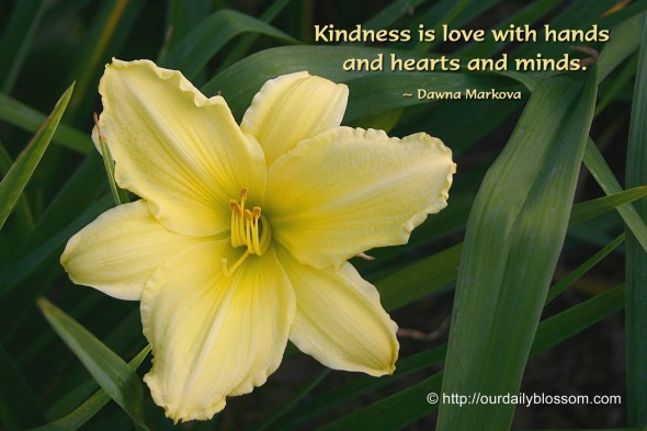Kindness is love with hands and hearts and minds. ~ Dawna Markova