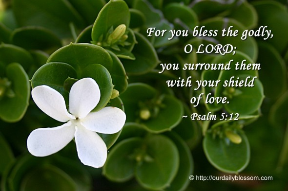 For you bless the godly, O LORD; you surround them with your shield of love. ~ Psalm 5:12