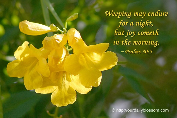 Weeping may endure for a night, but joy cometh in the morning. ~ Psalms 30:5