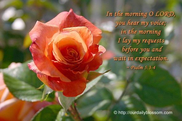 In the morning O LORD, you hear my voice; in the morning I lay my requests before you and wait in expectation. ~ Psalm 5:3-4