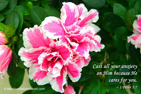 Cast all your anxiety on him because he cares for you. ~ 1 Peter 5:7