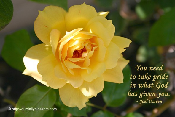 You need to take pride in what God has given you. ~ Joel Osteen