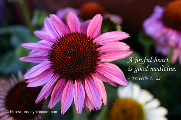 A joyful heart is good medicine. ~ Proverbs 17:22