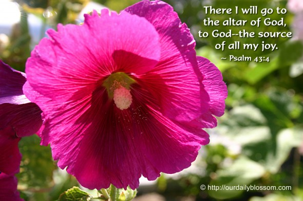 There I will go to the altar of God, to God--the source of all my joy. ~ Psalm 43:4
