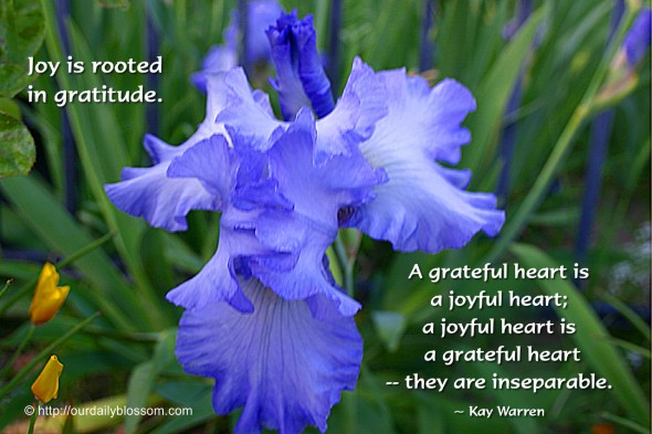 Joy is rooted in gratitude. A grateful heart is a joyful heart; a joyful heart is a grateful heart – they are inseparable. ~ Kay Warren.