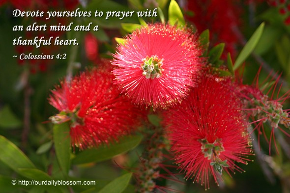 Devote yourselves to prayer with an alert mind and a thankful heart. ~ Colossians 4:2