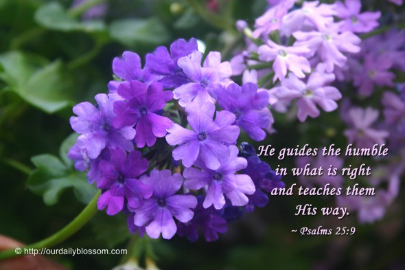 He guides the humble in what is right and teaches them his way. ~ Psalm 25:9