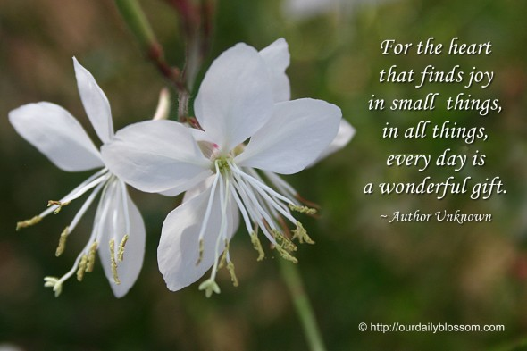 For the heart that finds joy in small things, in all things, every day is a wonderful gift. ~ Author Unknown