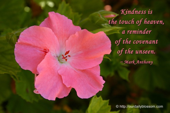 Kindness is the touch of heaven, a reminder of the covenant of the unseen. ~ Mark Anthony