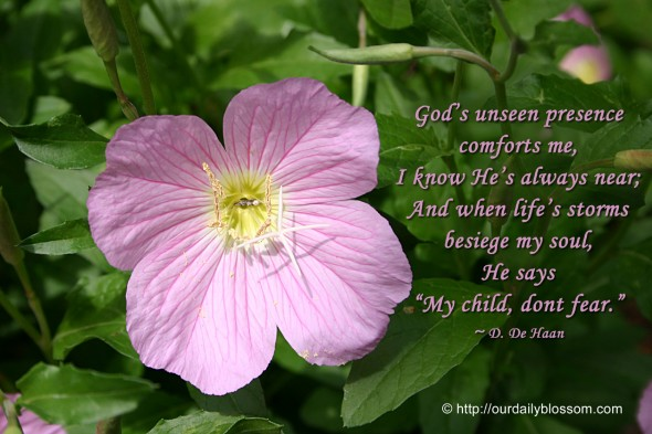 "God's unseen presence comforts me, I know He's always near; And when life's storms  besiege my soul, He says ""My child, dont fear."" ~ D. De Haan"
