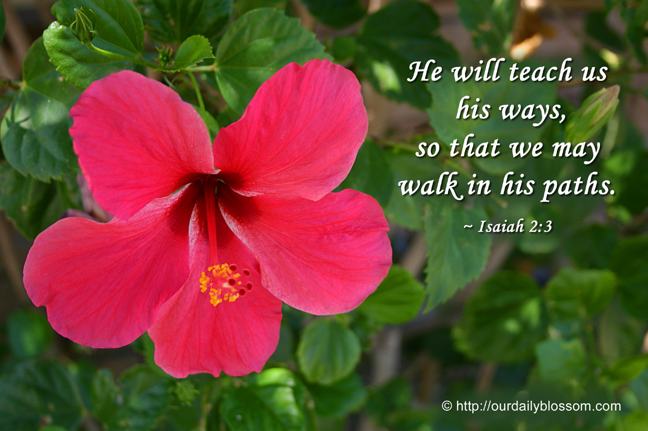 Bible Verse Isaiah 23 Our Daily Blossom