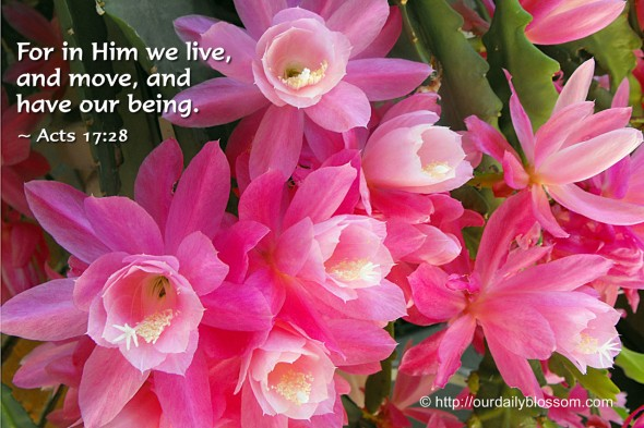 For in Him we live, and move, and have our being. ~ Acts 17:28