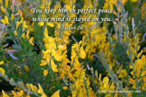 You keep him in perfect peace whose mind is stayed on you. ~ Isaiah 26:3
