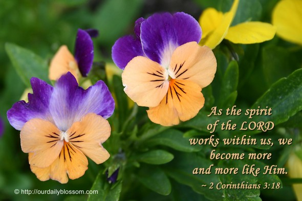 As the spirit  of the LORD  works within us, we become more  and more like Him. ~ 2 Corinthians 3:18