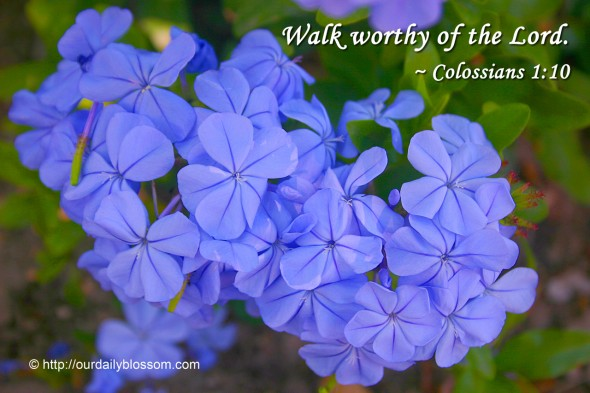 Walk worthy of the Lord. ~ Colossians 1:10