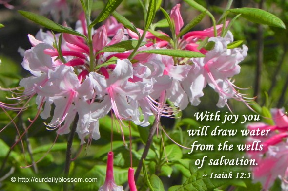 With joy you will draw water from the wells of salvation. ~ Isaiah 12:3