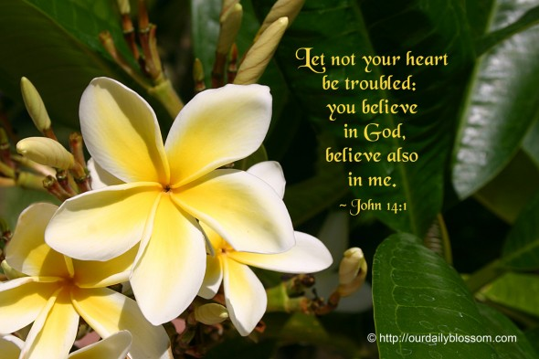 Let not your heart be troubled: you believe in God, believe also in me. ~ John 14:1