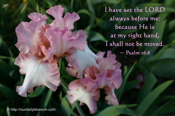 I have set the LORD always before me: because He is at my right hand, I shall not be moved. ~ Psalm 16:8