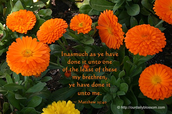 Inasmuch as ye have done it unto one of the least of these my brethren, ye have done it unto me. ~ Matthew 25:40