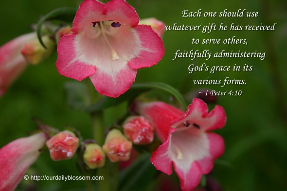 Each one should use whatever gift he has received to serve others, faithfully administering God's grace in its various forms. ~ 1 Peter 4:10