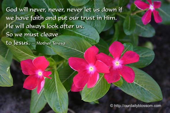 God will never, never, never let us down if we have faith and put our trust in Him. He will always look after us. So we must cleave to Jesus. ~ Mother Teresa