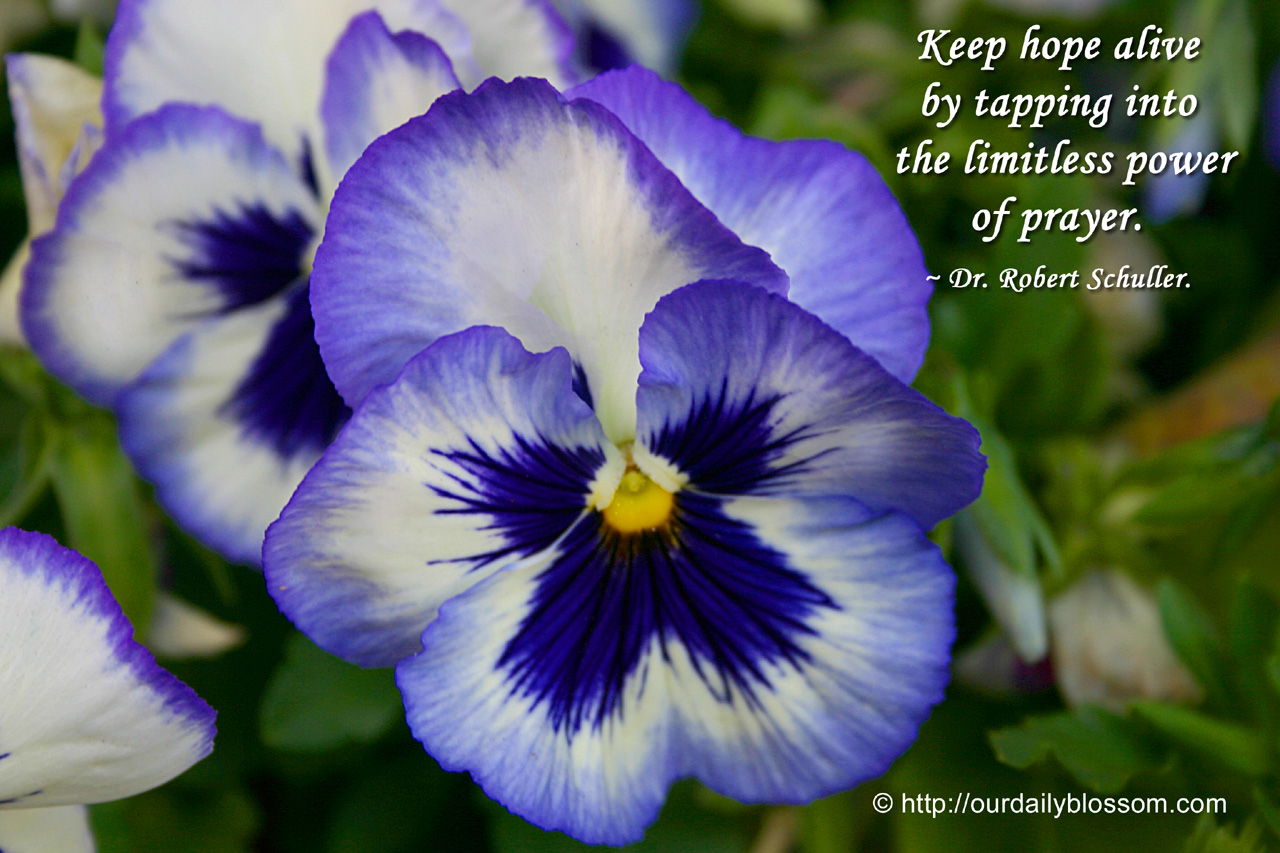 Spiritual quote dr robert schuller our daily blossom view full size izmirmasajfo Choice Image