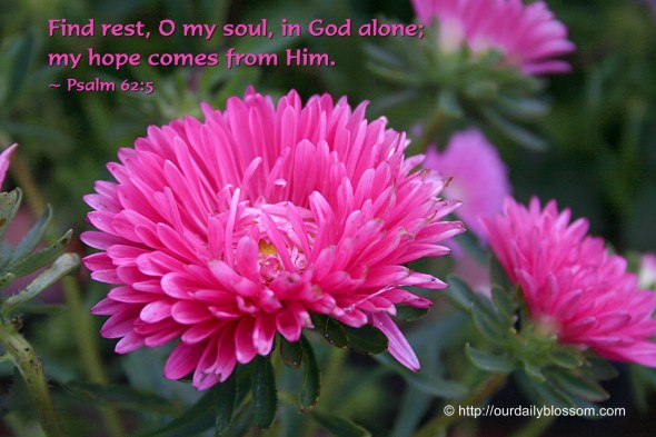 Find rest, O my soul, in God alone; my hope comes from Him. ~ Psalm 62:5
