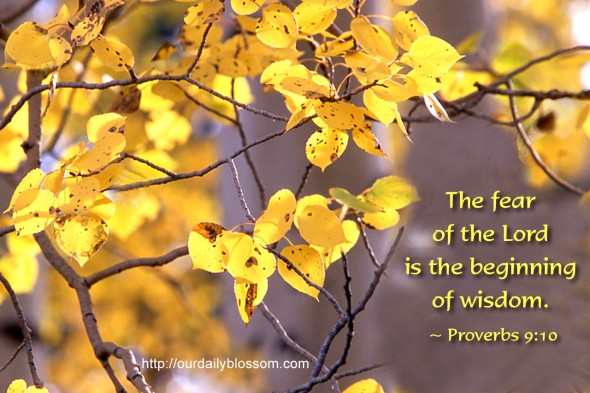 The fear of the Lord is the beginning of wisdom. ~ Proverbs 9:10