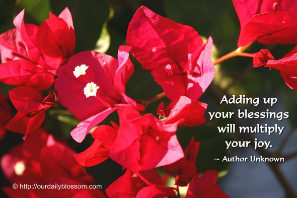 Adding up your blessings will multiply your joy. ~ Author Unknown