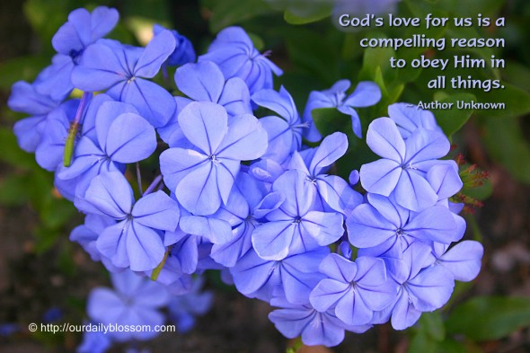 God's love for us is a compelling reason to obey Him in all things. ~ Author Unknown